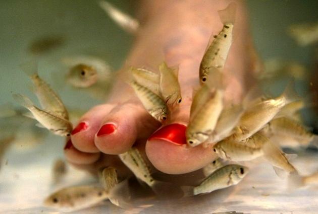 Terapi Ikan Desa Wisata Bromonilan